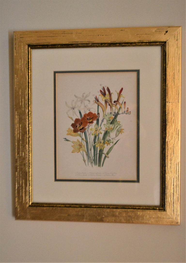 Set of four floral botanical hand painted lithographs from London England, dated 1846, by artist Jane W. Londer. They have been nicely framed in a leaf gilded wooden frame. The exterior dimensions are w 15