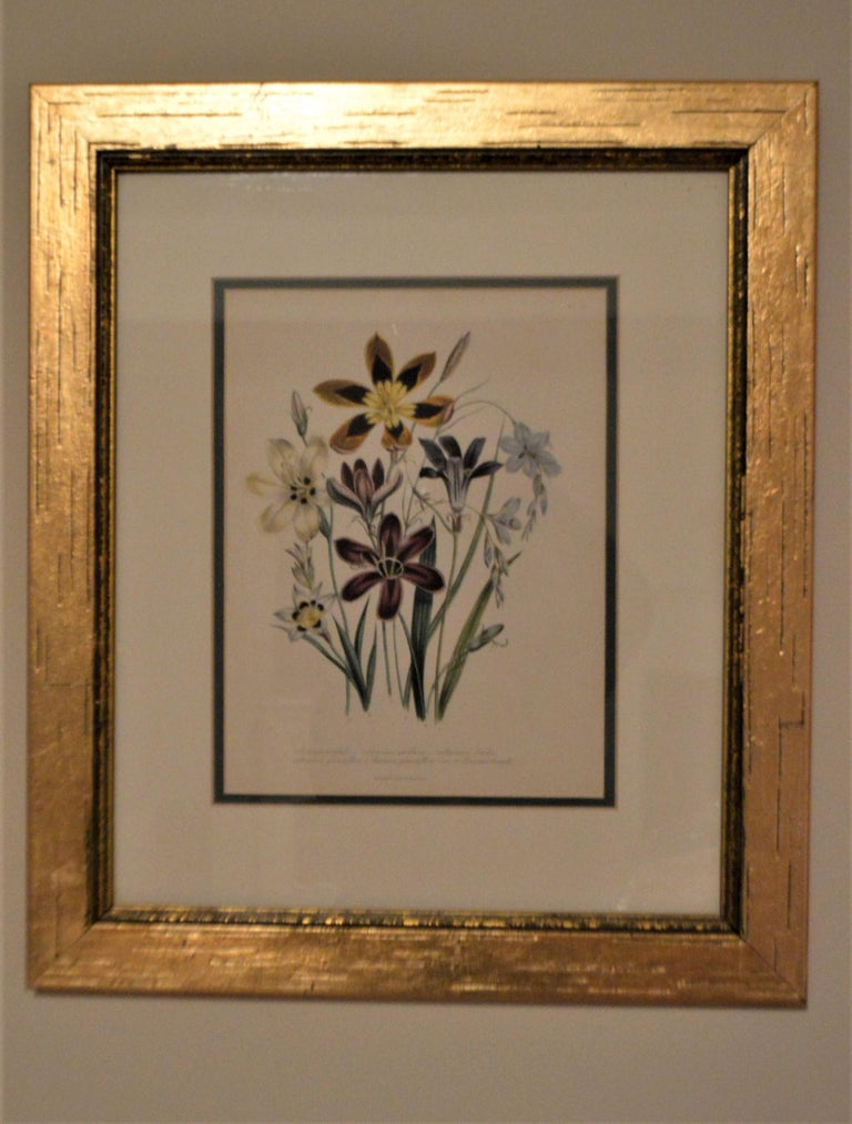 English Set of Four 19th Century Botanical Lithographs, Hand Painted, Gilded Frames For Sale