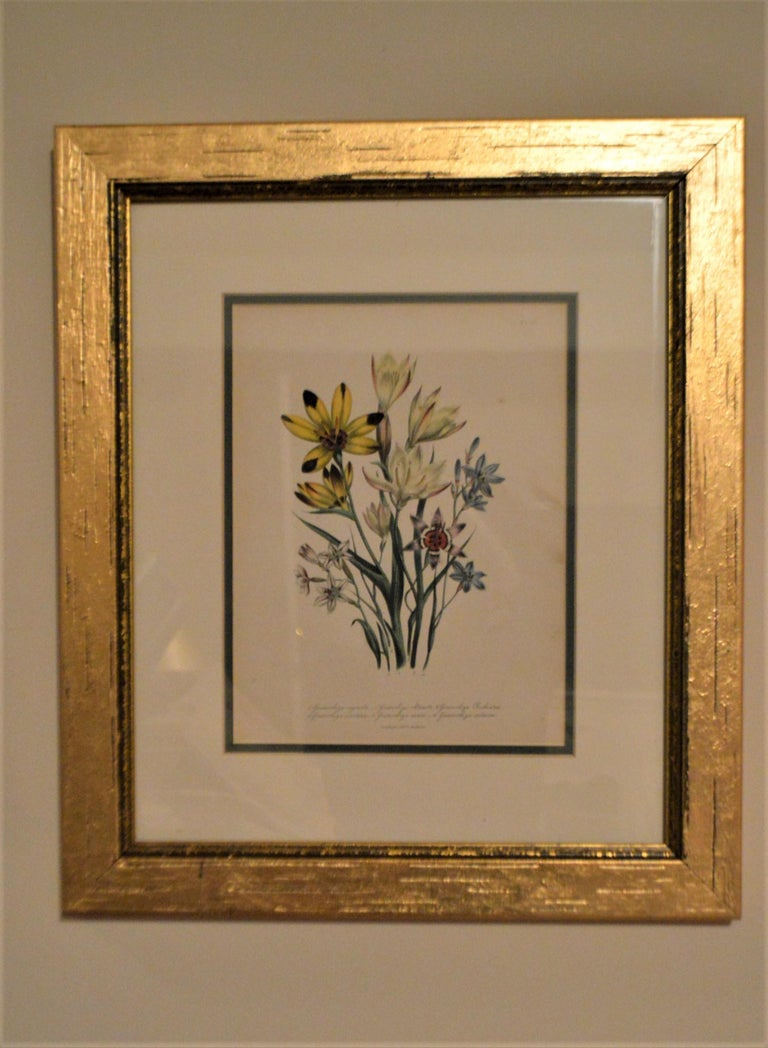 Gilt Set of Four 19th Century Botanical Lithographs, Hand Painted, Gilded Frames For Sale
