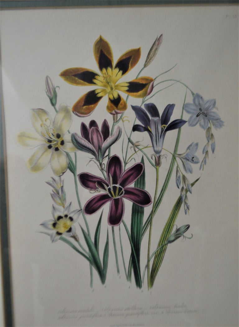 Set of Four 19th Century Botanical Lithographs, Hand Painted, Gilded Frames In Good Condition For Sale In Oakville, ON