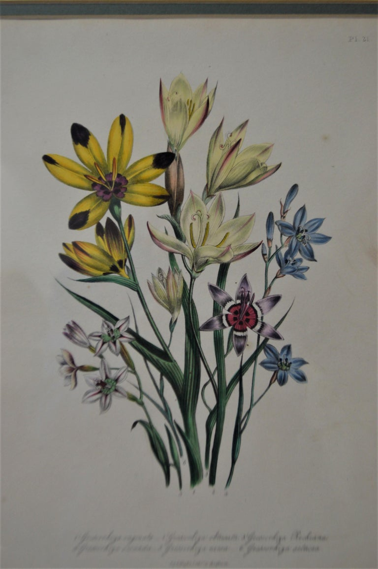 Wood Set of Four 19th Century Botanical Lithographs, Hand Painted, Gilded Frames For Sale