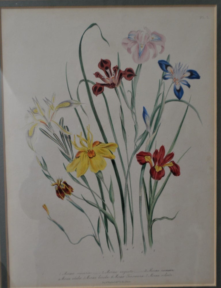 Set of Four 19th Century Botanical Lithographs, Hand Painted, Gilded Frames For Sale 2