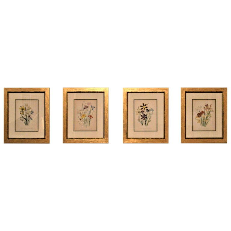 Set of Four 19th Century Botanical Lithographs, Hand Painted, Gilded Frames For Sale