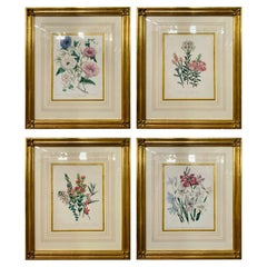 Set of Four 19th Century Botanical Prints Attributed to Mrs. Loudon
