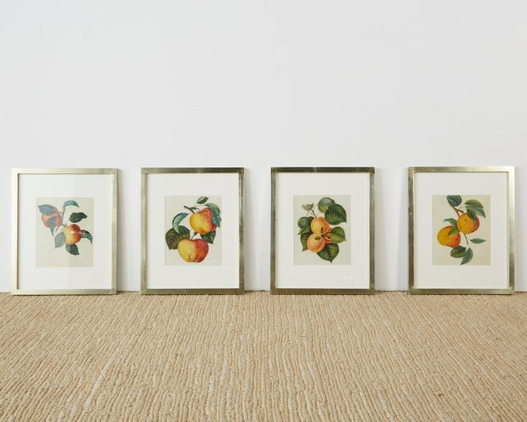 Set of Four 19th Century Hand-Colored Botanical Fruit Prints For Sale 8
