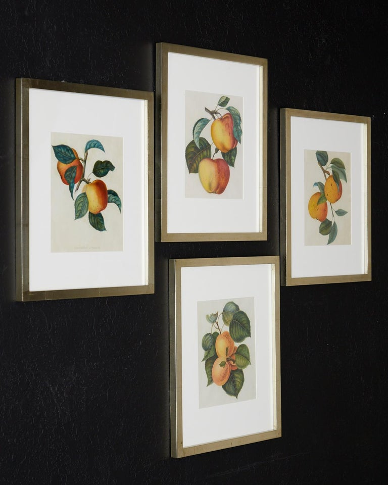 Set of Four 19th Century Hand-Colored Botanical Fruit Prints For Sale 9
