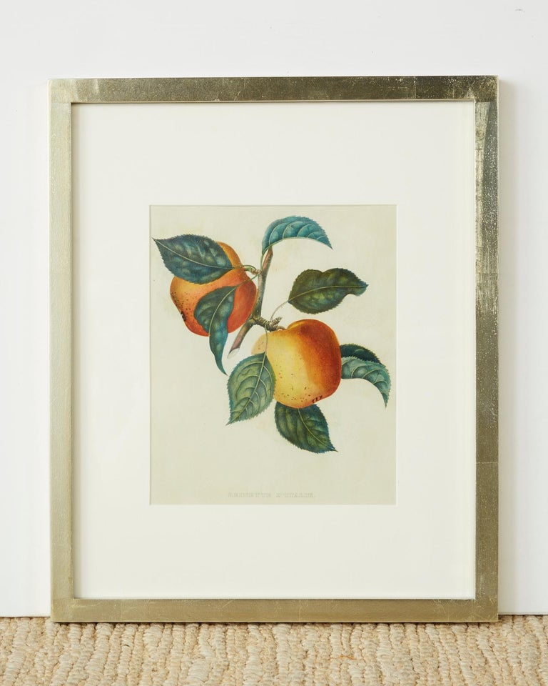 Victorian Set of Four 19th Century Hand-Colored Botanical Fruit Prints For Sale
