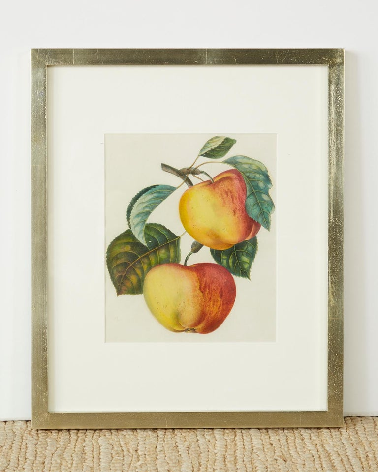 Belgian Set of Four 19th Century Hand-Colored Botanical Fruit Prints For Sale