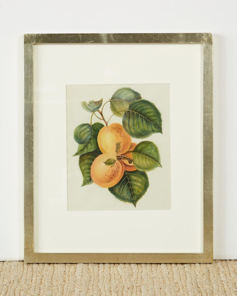 Hand-Crafted Set of Four 19th Century Hand-Colored Botanical Fruit Prints For Sale
