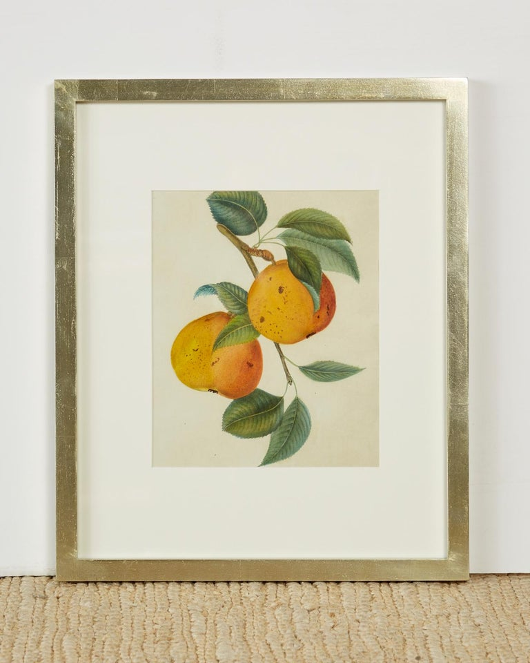 Set of Four 19th Century Hand-Colored Botanical Fruit Prints In Good Condition For Sale In Oakland, CA