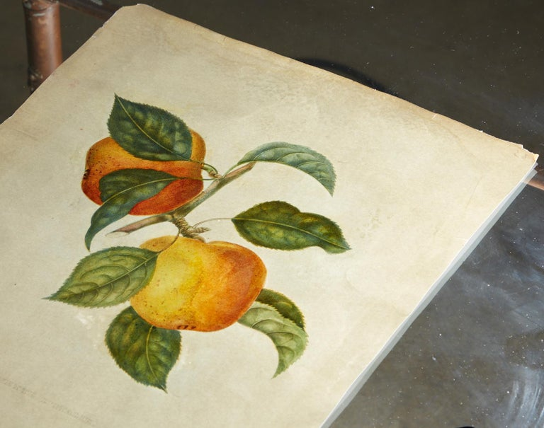 Glass Set of Four 19th Century Hand-Colored Botanical Fruit Prints For Sale