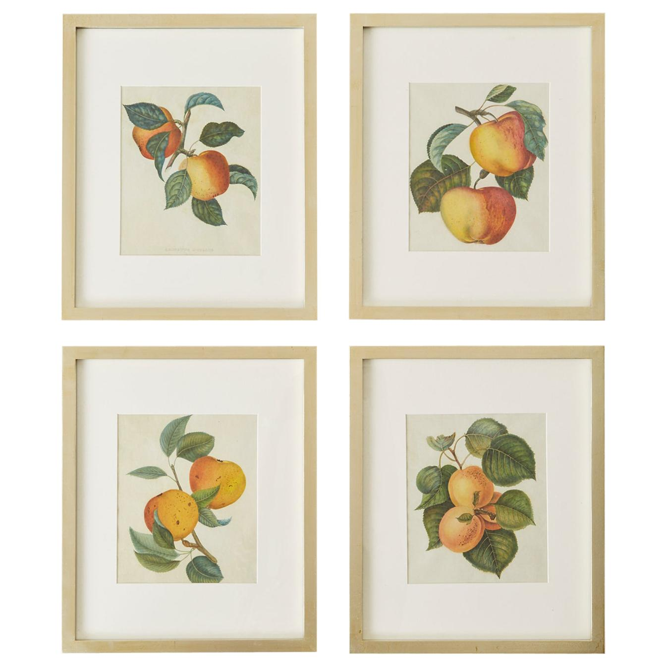 Set of Four 19th Century Hand-Colored Botanical Fruit Prints