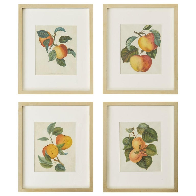 Set of Four 19th Century Hand-Colored Botanical Fruit Prints For Sale