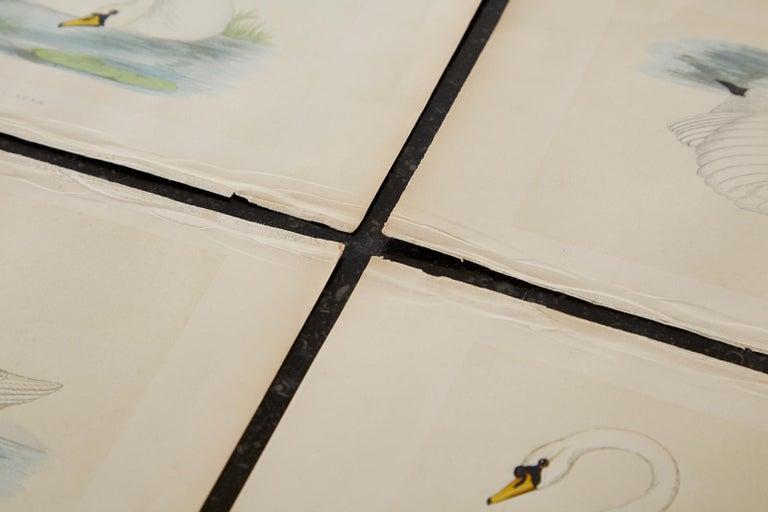 Set of Four 19th Century Swan Wood Block Prints 5