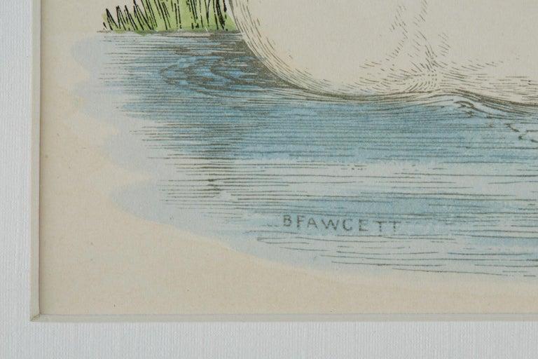 Set of Four 19th Century Swan Wood Block Prints 8