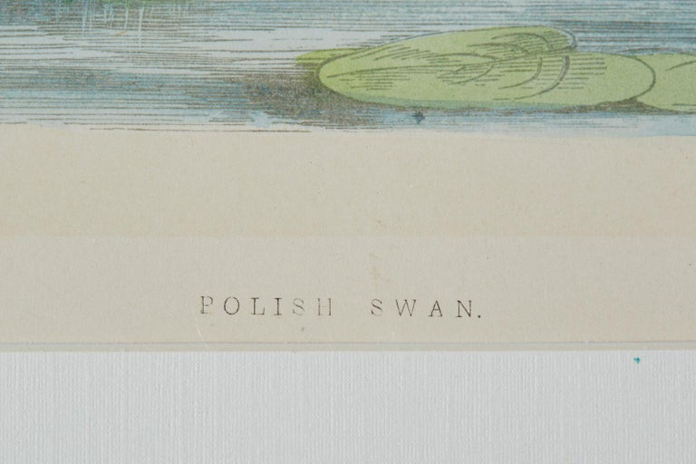 Set of Four 19th Century Swan Wood Block Prints 10