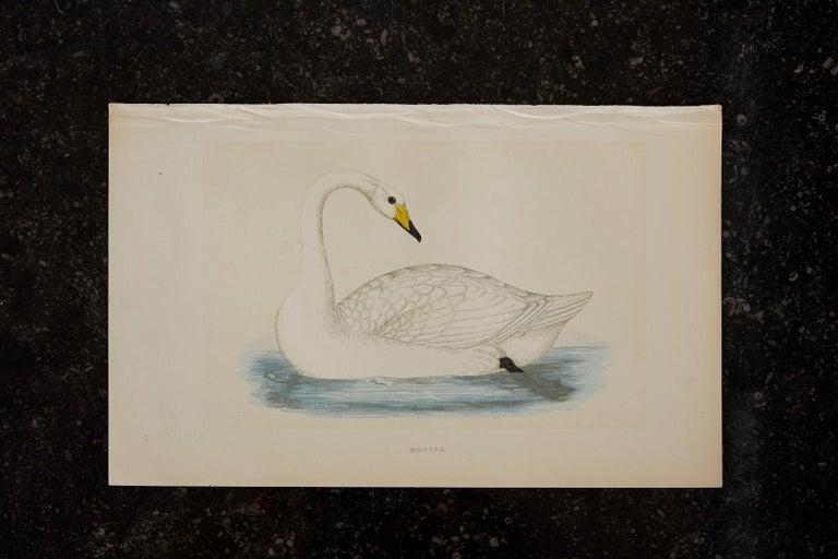 Set of Four 19th Century Swan Wood Block Prints 11