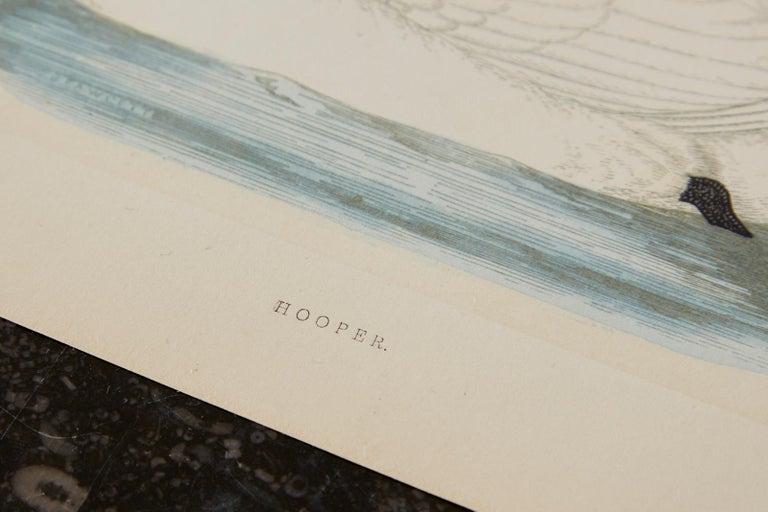 Set of Four 19th Century Swan Wood Block Prints 12