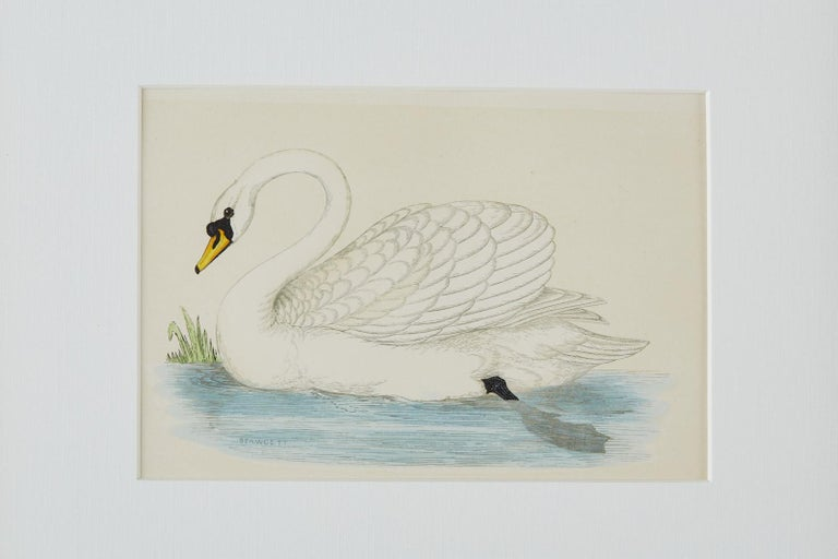 Silvered Set of Four 19th Century Swan Wood Block Prints