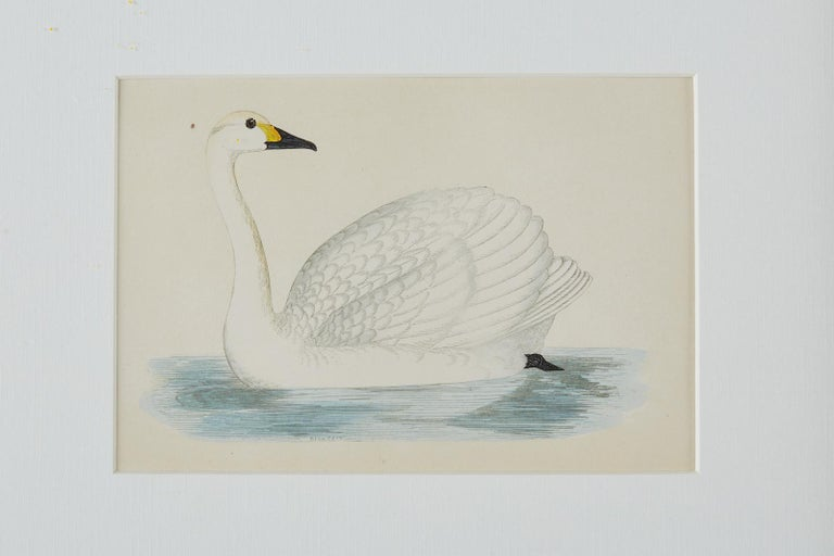 Set of Four 19th Century Swan Wood Block Prints In Good Condition In Oakland, CA