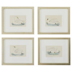 Set of Four 19th Century Swan Wood Block Prints