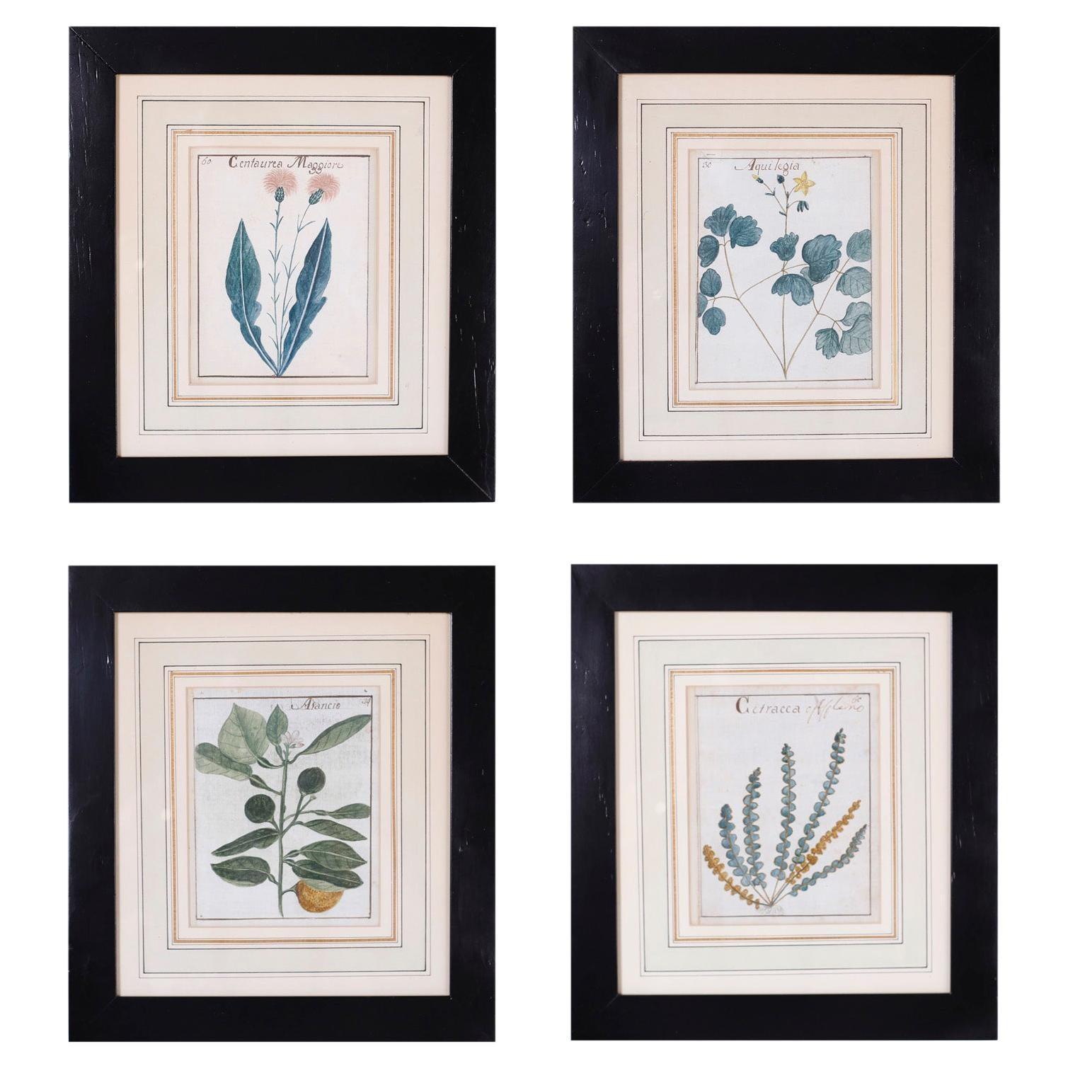 Set of Four Antique Botanical Watercolors