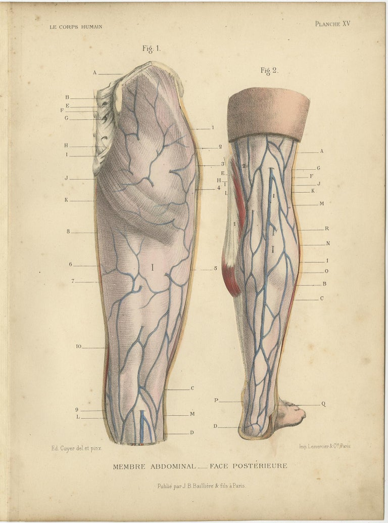 Set of Four Antique Prints of Human Legs by Kuhff, 1879 In Good Condition For Sale In Langweer, NL