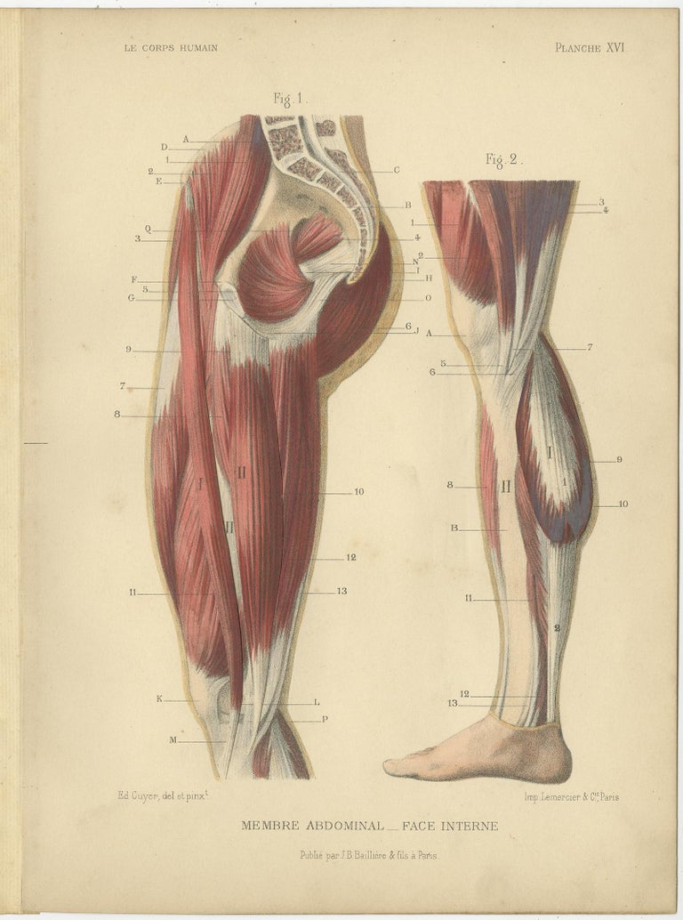 19th Century Set of Four Antique Prints of Human Legs by Kuhff, 1879 For Sale