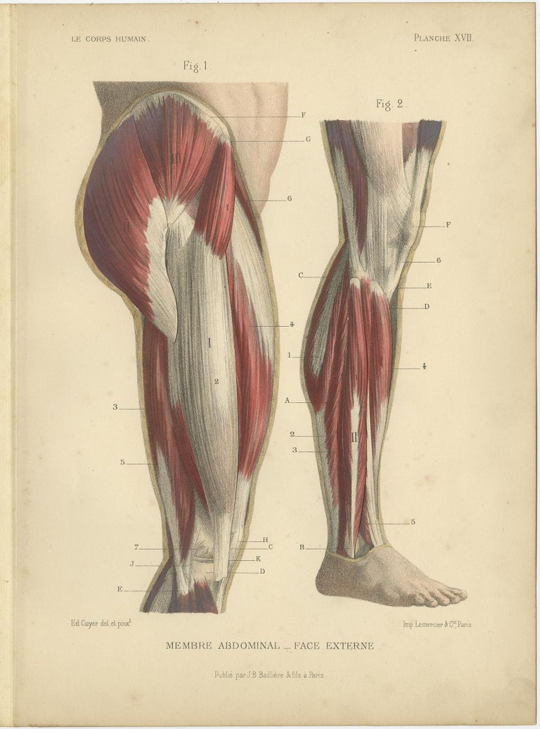Paper Set of Four Antique Prints of Human Legs by Kuhff, 1879 For Sale