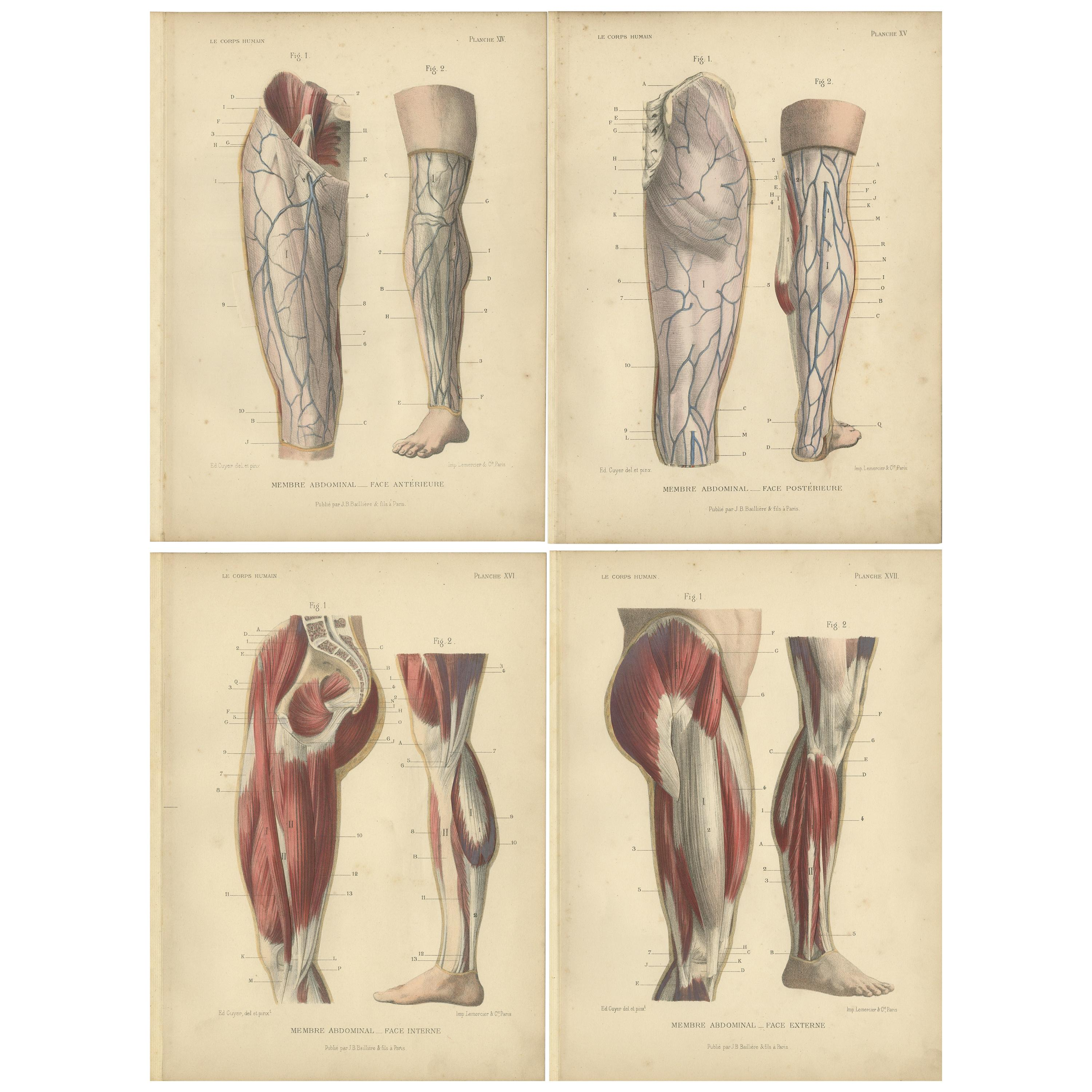 Set of Four Antique Prints of Human Legs by Kuhff, 1879