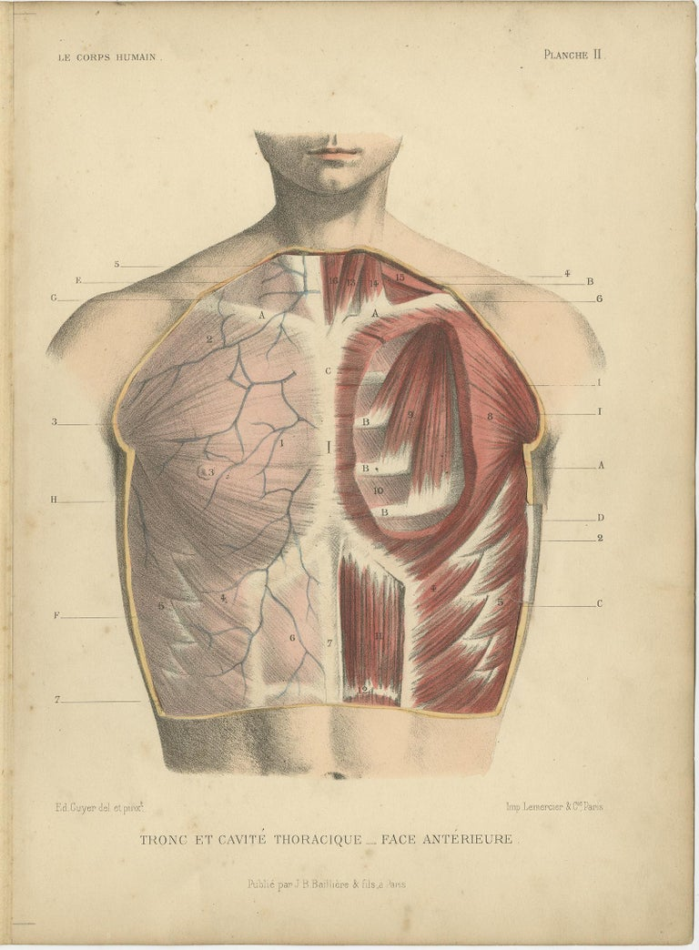 Set of four antique anatomy prints titled 'Tronc' and 'Tronc et Cavité'. Colored lithographs of the human trunk with superimposed flaps. These prints originate from 'Le Corps Humain' by G.A. Kuhff. Illustrated by Edouard Cuyer.