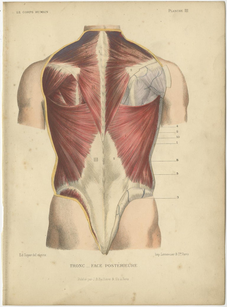 Set of Four Antique Prints of the Human Torso by Kuhff, 1879 In Good Condition For Sale In Langweer, NL