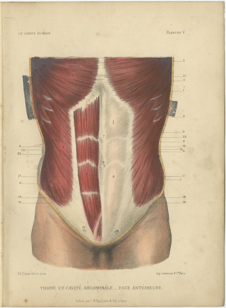 Paper Set of Four Antique Prints of the Human Torso by Kuhff, 1879 For Sale