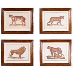 Set of Four Big Cat Prints