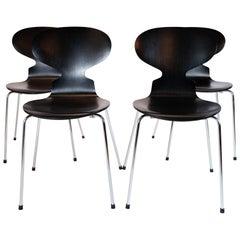 Set of Four Black Ant Chairs, Model 3101, Designed by Arne Jacobsen in 1952