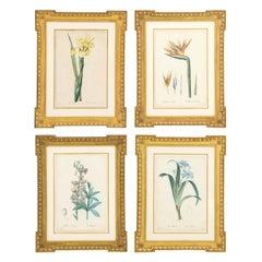 Set of Four Botanical Prints by Pierre-Joseph Redoute