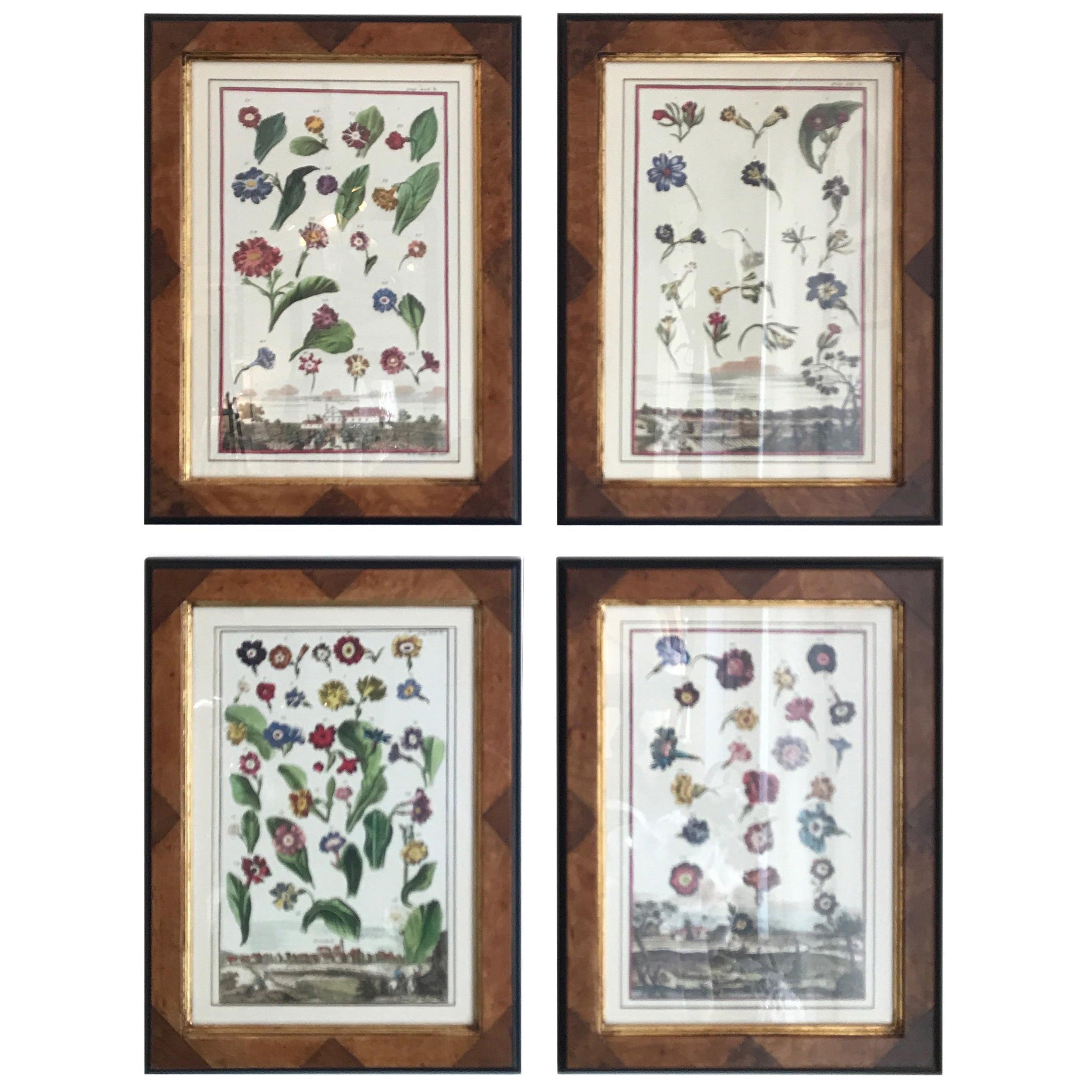 Set of Four Botanicals in Burl Wood Frames
