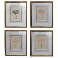 Set of Four Chinese Watercolor Flowers with Numbered Plates on English Mats