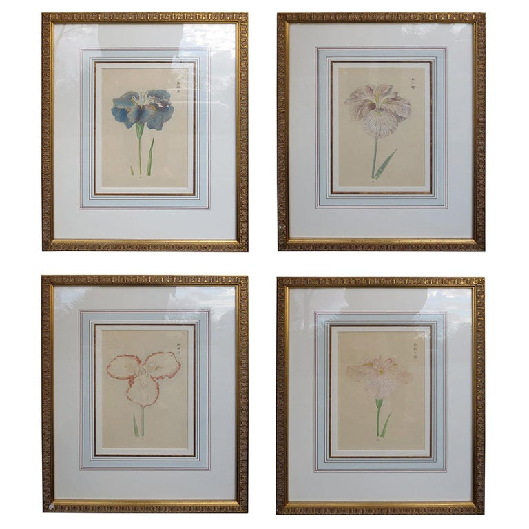Set of Four Chinese Watercolor Flowers with Numbered Plates on English Mats For Sale