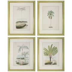 Set of Four Chomolithographs of Brazilian Palms by Joao Barbosa Rodrigues
