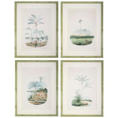 Set of Four Chromolithographs of Brazilian Palms by Joao Barbosa Rodrigues