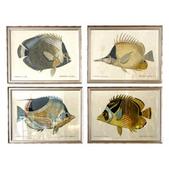 Set of Four Colored Fish Engravings