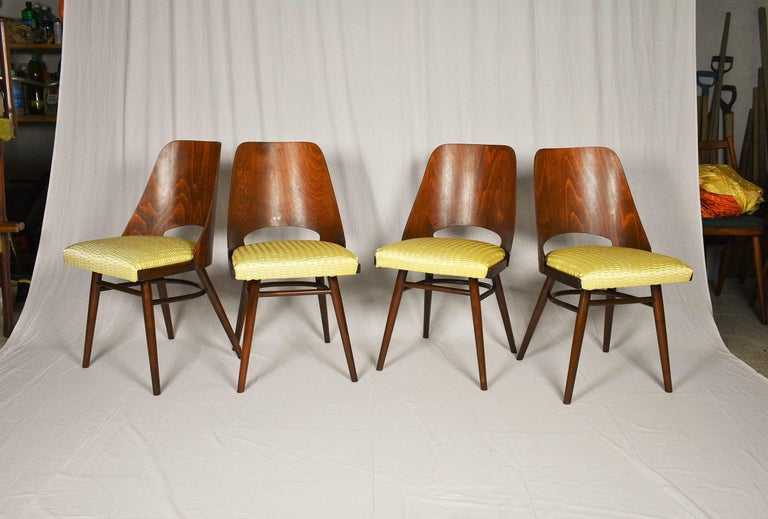 Set of Four Dining Chairs, Ton, Designed by Oswald Haerdtl, 1950s, Expo 58 In Good Condition For Sale In Praha, CZ