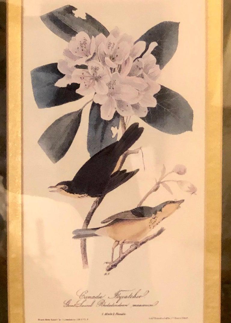 Set of Four Finely Framed Copper Engravings of Birds John James Audubon For Sale 4