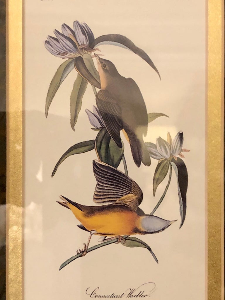 Set of Four Finely Framed Copper Engravings of Birds John James Audubon For Sale 5