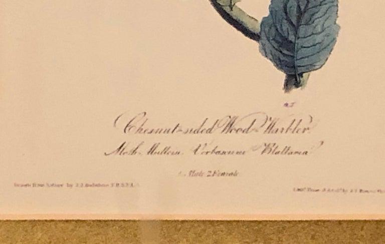 Set of Four Finely Framed Copper Engravings of Birds John James Audubon For Sale 6