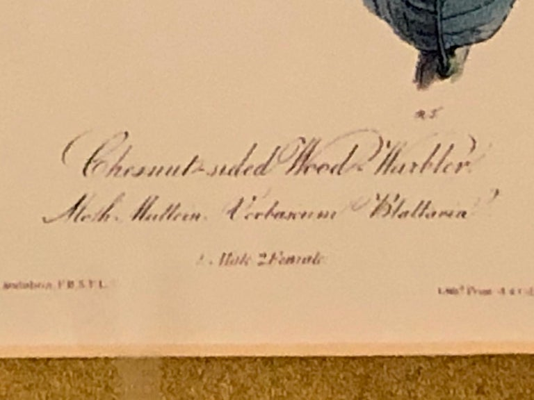 Set of Four Finely Framed Copper Engravings of Birds John James Audubon For Sale 7