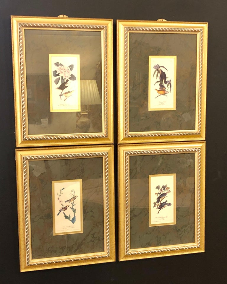Set of four finely framed copper engravings of birds. This wonderfully deocrative works on paper are all signed John James Audubon and numbered. Each on a custom black matting in a giltwood frame.