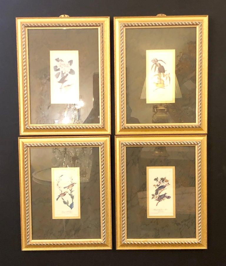 Belle Époque Set of Four Finely Framed Copper Engravings of Birds John James Audubon For Sale