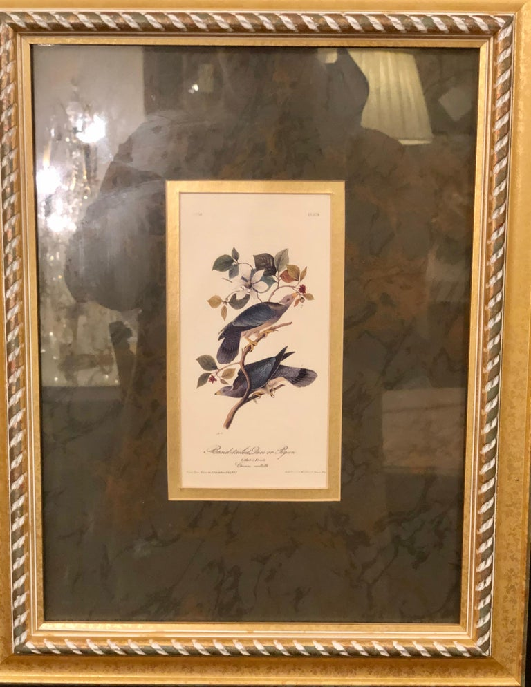 Giltwood Set of Four Finely Framed Copper Engravings of Birds John James Audubon For Sale